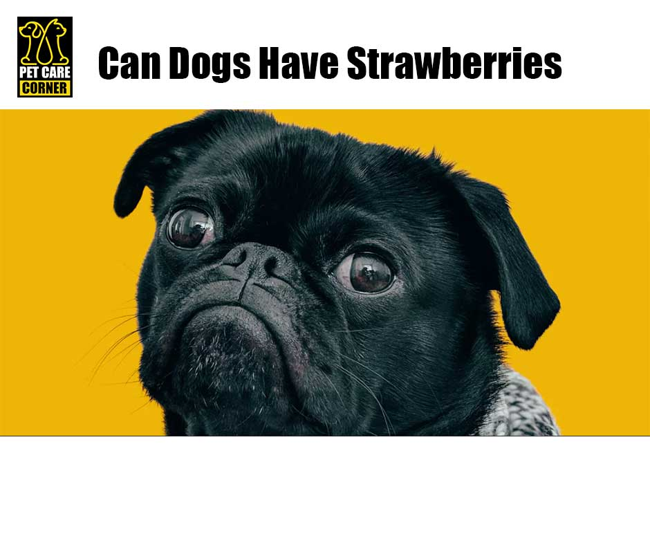 can dogs have strawberries