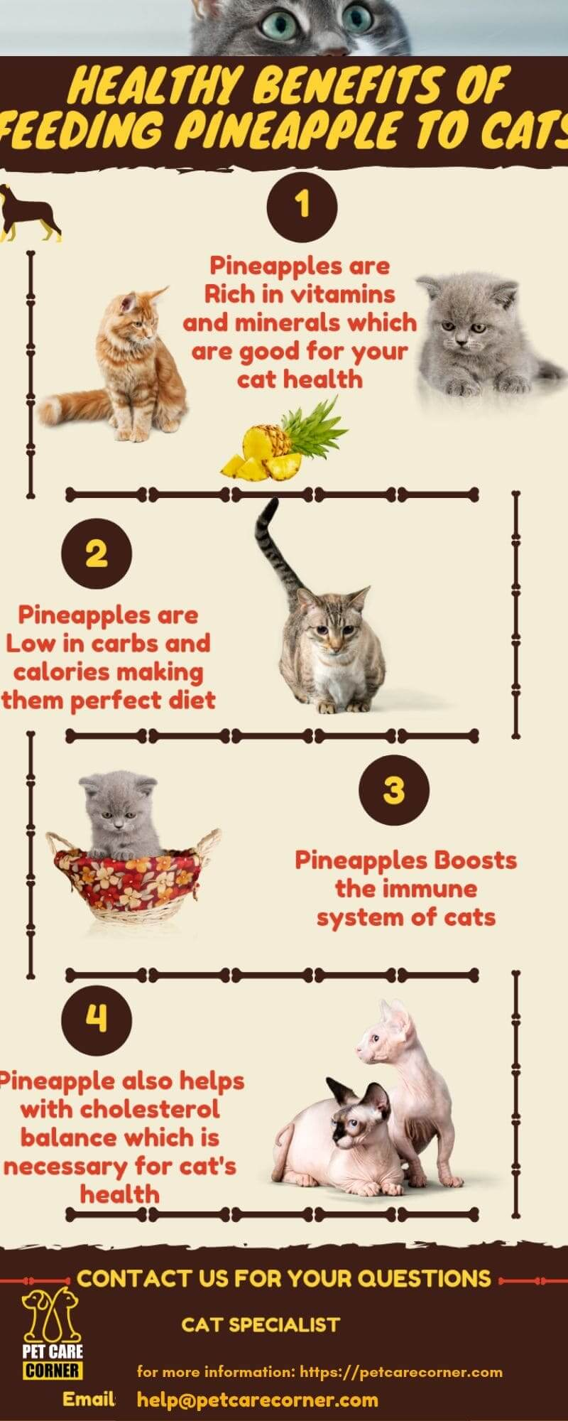 healthy benefits of feeding pineapple to cats