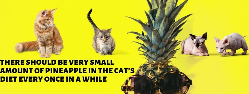 how much pineapple to give to my cat