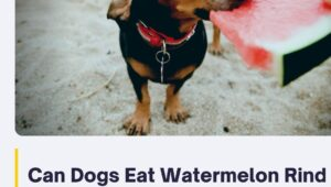 Can Dogs Eat Watermelon Rind or Watermelon Seeds